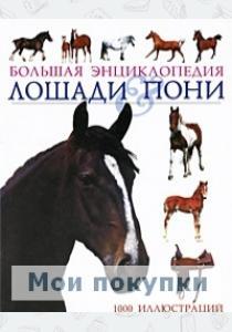 Лошади  пони